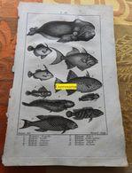 Poissons Dont Baleine : Planche Du Nouveau Dictionnaire D'histoire Naturelle - 1803 - Stampe & Incisioni