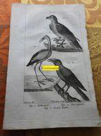 Balbusard, Bec Ouvert Et Grand Barbu : Planche Du Nouveau Dictionnaire D'histoire Naturelle - 1803 - Stampe & Incisioni