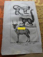 Alouate, Aye-aye, Axis : Planche Du Nouveau Dictionnaire D'histoire Naturelle - 1803 - Stampe & Incisioni