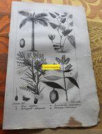 Plantes Dont Arec : Planche Du Nouveau Dictionnaire D'histoire Naturelle - 1803 - Stampe & Incisioni