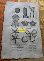 Etoiles De Mer Et Divers : Planche Du Nouveau Dictionnaire D'histoire Naturelle - 1803 - Estampes & Gravures