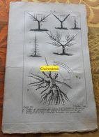 Taille Des Arbres : Planche Du Nouveau Dictionnaire D'histoire Naturelle - 1803 - Estampes & Gravures