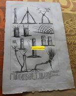 Greffe Des Arbres : Planche Du Nouveau Dictionnaire D'histoire Naturelle - 1803 - Estampes & Gravures