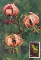 Carte  Maximum  1er  Jour  ANDORRE  Fleurs  Des  Vallées  : Lis  Des  Pyrénées    1980 - Maximumkarten (MC)