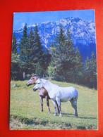 2 Horses,Golnik Sign - Chevaux