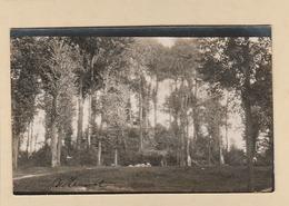 Carte Photo : Bellancourt. - En Sous-Bois, Poste D'Observation. - ( Modern '' Photo '' Nantes ). - France