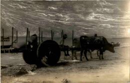 Nicaragua - Native With Ox-cart Corinto Bay - Nicaragua