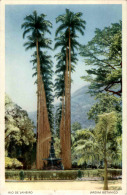 Brasil - Rio De Janeiro - Jardim Botanico - Brazil