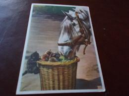 B697  Cavallo Viaggiata Lieve Piega - Caballos