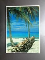 Carte Postale : TAHITI, Les Noix De Coco Ouvertes Sont Alignées Une Fois Vidées - French Polynesia