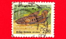 SRI LANKA - Usato - 1990 - Pesci - Ornate Paradise Fish (Malpulutta Kretseri) - 2.00 - Sri Lanka (Ceylon) (1948-...)