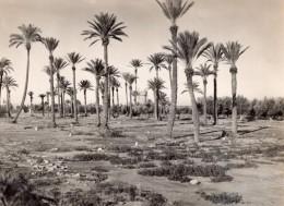 Maroc Marrakech Jardins De La Menara Pres Du Poste Americain Ancienne Photo 1940's - Africa