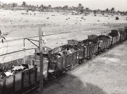 Lybie Transport De Moutons Par Voie Ferree Train Ancienne Photo 1940's? - Africa