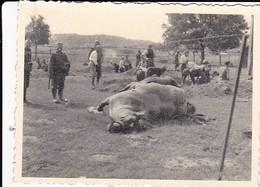 Foto Deutsche Soldaten Mit Staubmasken Beim Begraben Von Toten Pferden - 2. WK - 8*5,5cm (36643) - Krieg, Militär