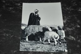 3391- A Shepherd,  Jordan - Giordania