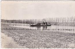 Gironde-Bassin D'Arcachon - Parc à Huîtres - Francia