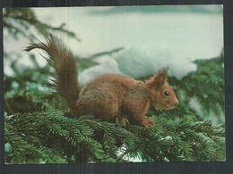 Thème Animal. Ecureuil, Ardilla, Squirrel - Autres