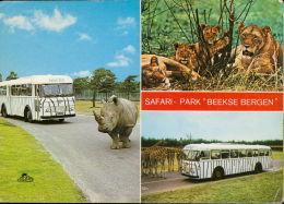 Safari Park Beekse Bergen Rino Lion Giraffe Bus Hilvarenbeek - Pays-Bas