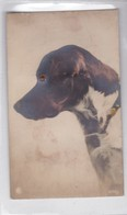 "PERRO DOG PERFIL PROFIL CIIRUSE. NPG. CIRCA 1900s. ""A SYSTEME"" BULGING EYES- BLEUP - Mechanical"