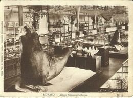 "1231 "" MONACO - MUSEE OCEANOGRAPHIQUE - FOTO N° 15 "" I FOTO ORIG. - Museo Oceanografico"