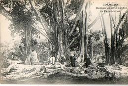 COLOMBO - Banian Dans Le Jardin De Paradeniya - Sri Lanka (Ceylon)