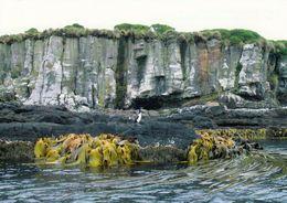 1 AK Enderby Island - Gehört Zu Den Auckland Islands * Subantarktische Insel Neuseelands Seit 1998 UNESCO Weltnaturerbe - Neuseeland