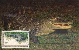 D35176 CARTE MAXIMUM CARD FD 1971 USA - ALLIGATOR CP ORIGINAL - Reptiles & Amphibians