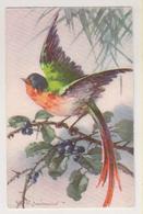 C.Klein.Bird.HWB Edition Nr.4272 - Klein, Catharina