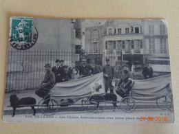Orléans - Les Chiens Ambulanciers - Croix-Rouge