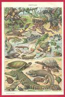 Reptiles, Reptile, Illustration Adolphe Millot, Serpent, Tortue, Grenouille, Crocodile, Lézard...Larousse 1908 - Autres