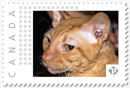 CORNISH REX CAT = Picture Postage Stamp MNH Canada 2018 [p18-09-25] - Hauskatzen