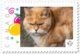 Grumpy CAT = Picture Postage Stamp MNH Canada 2018 [p18-09-26] - Katten