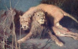 [DC7504] CPA - LEONI - VISTI CON EFFETTO NOTTURNO - Old Postcard - Lions