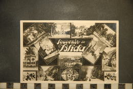 CP, ALGERIE, Souvenir De BLIDA, Diverses Vues - Blida
