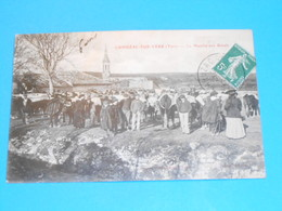 81 ) Cahuzac-sur-vère - Le Marché Aux Boeufs : Année 1909 : EDIT : Vaysse - Other Municipalities
