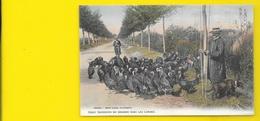 Colorisée Gardeurs De Dindons (Guillier) Landes (40) - Francia