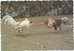 V2650 Indonesia - Bali - Cock Fight Balinese Style - Manyabung Ayam / Non Viaggiata - Indonesia