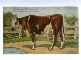 182821 RUSSIAN BUNGART Norman Cow Vintage BAGGOVUT Postcard - Stiere