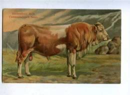 182822 RUSSIA BUNGART Simmental Bull Vintage BAGGOVUT Postcard - Taureaux
