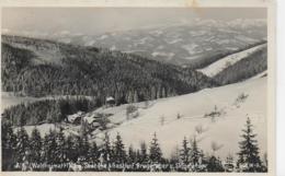AK 0042  Alpl ( Waldheimat ) - Gasthof Bruggraber Und Skigelände / Verlag Frank Um 1936 - Krieglach