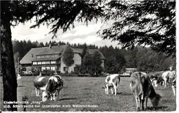 Allemagne   KINDERHEILSTATTE  STIEG -  WALDSHUT BADEN    (  Voir Le Verso) - Waldshut-Tiengen
