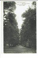 CPA - Carte Postale -BELGIQUE -Camp De Beverloo- Allée Des Soupirs  S 2398 - Beringen