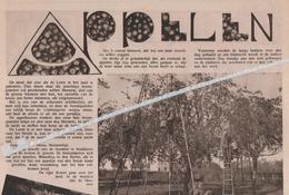 DE APPELOOGST ..1933.. BORGLOON MET FOTO ZIJDELINGS VAN HET APPELJAM FABRIEK  ( STROOPFABRIEK  ? ) - Oude Documenten
