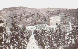 Ardèche        110        TOURNON Su RHÖNE.Les Vignobles De Cornas .Cuvée AUDEBERT & DELAS - Tournon