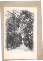 ALGER - ALGERIE - CPA DOS SIMPLE - Jardin D'Essai - Allée Des Palmiers  - DELC3 - - Alger