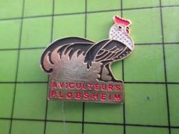 1118a Pin's Pins / Rare Et De Belle Qualité / THEME ANIMAUX / OISEAU COQ AVICULTEURS PLOBSHEIM - Animals