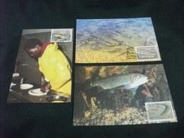 PESCE FISH  MAXIMUM 3 CARTOLINE FRANCOBOLLO CISKEI TROTA TROUT HATCHERIES - Pesci E Crostacei