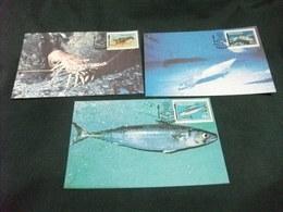 PESCE FISH  MAXIMUM 3 CARTOLINE FRANCOBOLLO TRANSKEI PANULIRUS HOMARUS SCOMBER JAPONICUS LOLIGO REYNAUDI - Pesci E Crostacei