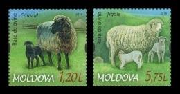 Moldova 2014 Mih. 877/78 Fauna. Sheeps MNH ** - Moldavia