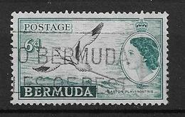 BERMUDA   1953 Local Motives And Queen Elizabeth II    USED Phaeton Lepturus - Bermuda